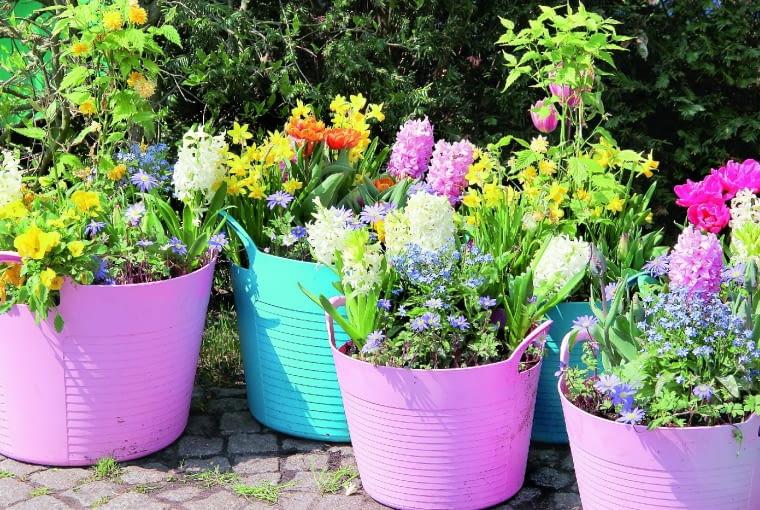"""Przenośne """"Rabatki"""" - doniczki zroślinami stoją wplastikowych osłonkach wypełnionych keramzytem."""