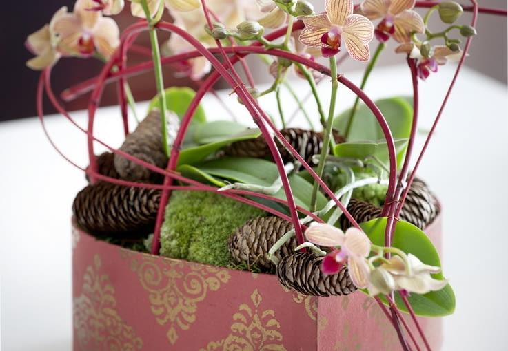 Najpopularniejsze storczyki - falenopsis. Kwiaty doniczkowe