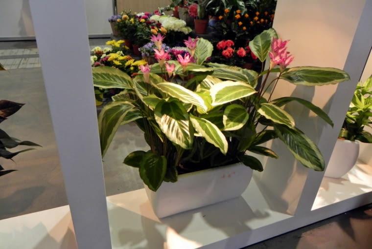 Targi Gardenia 2012