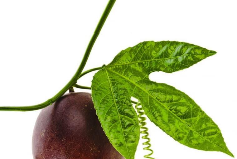 Jadalne gatunki tej rośliny nazywa się marakują lub granadillą