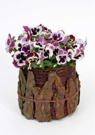 Bratki zazwyczaj wysadzane na kwietnikach lub balkonach mogą dekorować również mieszkania. Tworzą ładną całość z ażurowym pojemnikiem wykonanym ze sztywnego ozdobnego sznurka, a od dołu oklejonym kawałkami kory.