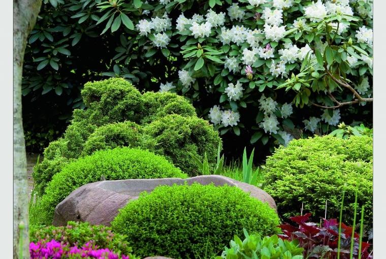 Nastrój prawdziwie japoński: kamienna misa z wodą, różanecznik i strzyżone azalie japońskie.