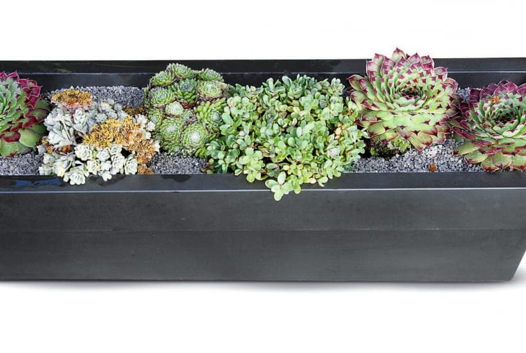 Black metal planter with mixed succulents,'The Sadolin Nature to Nurture Garden', Hampton Court Flower Show, 2009, designed by Philippa Pearson