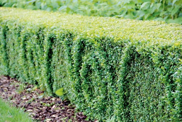 Strzyżone reliefy - na taką fantazję stać wyłącznie ogrodnika artystę. Niełatwo powycinać aż tak precyzyjne wzorki, ale efekt, trzeba to przyznać, jest oszałamiający.