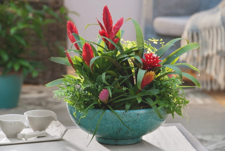 Bromelie i paprocie dobrze rosną we wspólnej misie - obie grupy roślin lubią rozproszone światło i wilgotne powietrze.