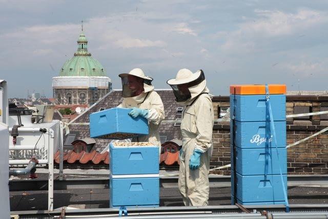 Ule na dachu siedziby EEA w Kopenhadze, źródło: www.eea.europa.eu