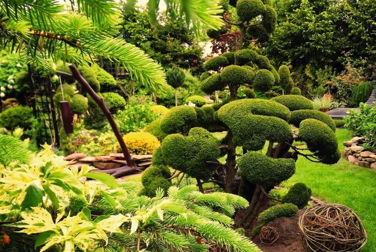 NIWAKI, czyli ogrodowe bonsai, to moja duma i ozdoba ogrodu.