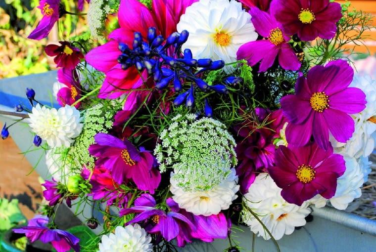 Pąki kwiatów wykorzystują ostatnie ciepłe dni, by rozwijać płatki. Ale nowe pąki się już nie zawiązują. To bukiety na pożegnanie sezonu. Wkrótce wiązanki będę robić z jarzębiny i suchych kwiatów.