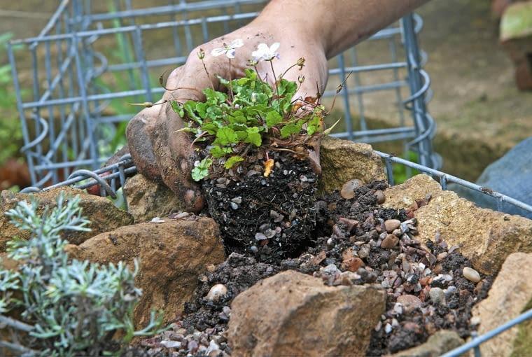 Gabione bef´llen und bepflanzen SLOWA KLUCZOWE: Bepflanzung Beratung Farbe Flechtkorb Fotografie Gabione Horizontal Korb Pflanze anpflanzen auff´llen bepflanzen einpflanzen auff´llen Querformat
