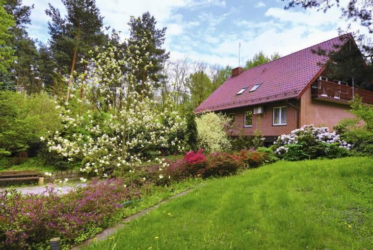 Leśniczówka w stradomi otulona jest niezwykłą kolekcją azalii japońskich. Kwitnie też magnolia żółta 'Yellow River'.