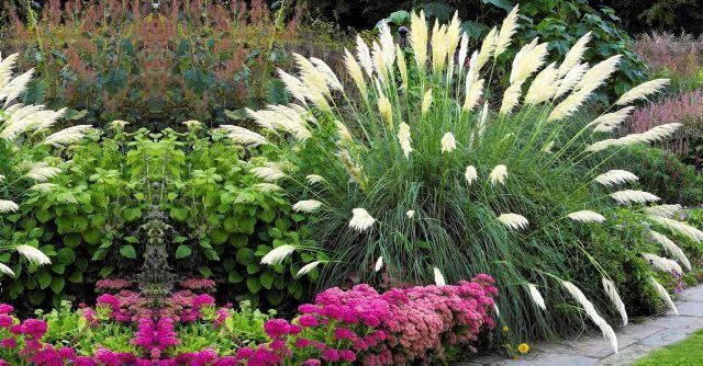 Summer border with Cortaderia sellowana - Pampas grass, Sedum spectabile