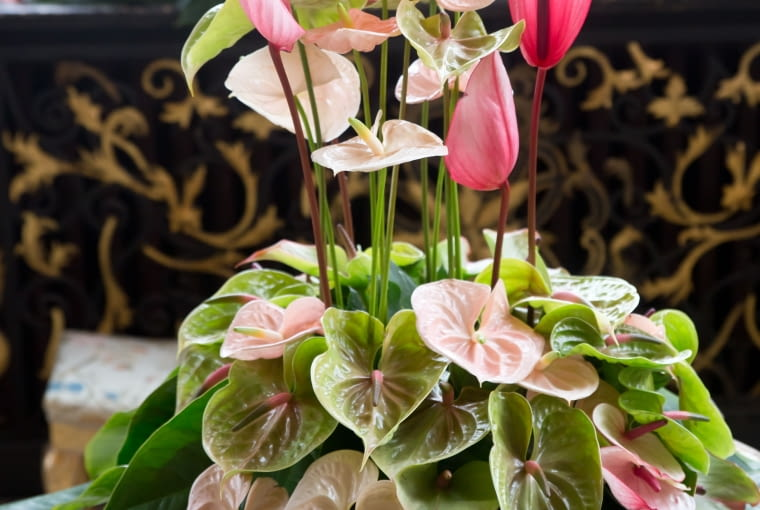 Wystawa kwiatów