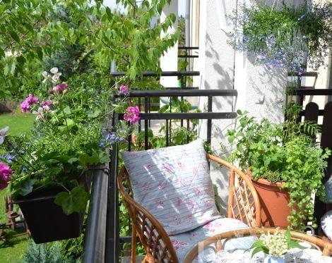 Balkon wśród kwiatów