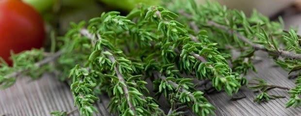 Rośliny doniczkowe: wśród ziołowych aromatów. Tymianek działa bakteriobójczo, leczy górne drogi oddechowe. Jako przyprawa jest chętnie używany zwłaszcza w kuchni francuskiej.