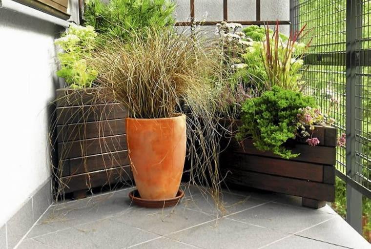 Trawy ozdobne. Oryginalny i łatwy w pielęgnacji zestaw na każdy słoneczny balkon: piękne trawy - w donicy turzyca, a w skrzynce imperata oraz iglaki, rozchodniki i wrzosy