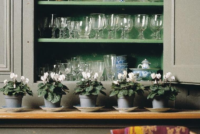 kwiaty doniczkowe, cyklamen, kwiaty w stylu retro, rośliny we wnętrzu
