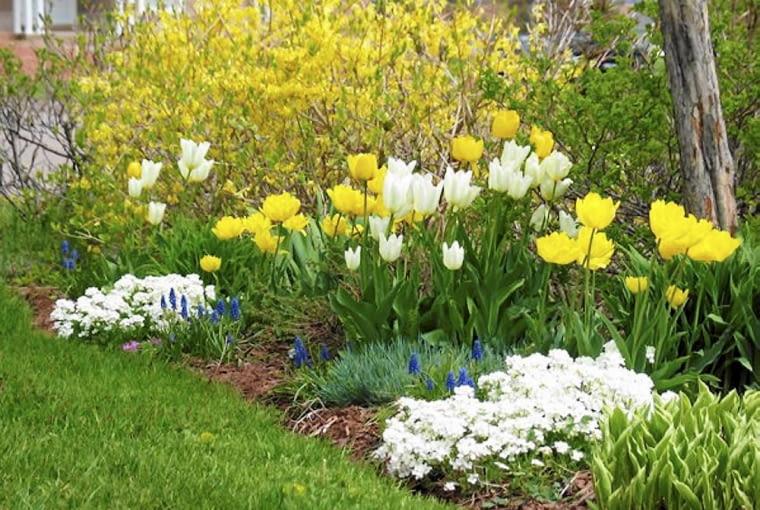 Kwiaty cebulowe wokół krzewów