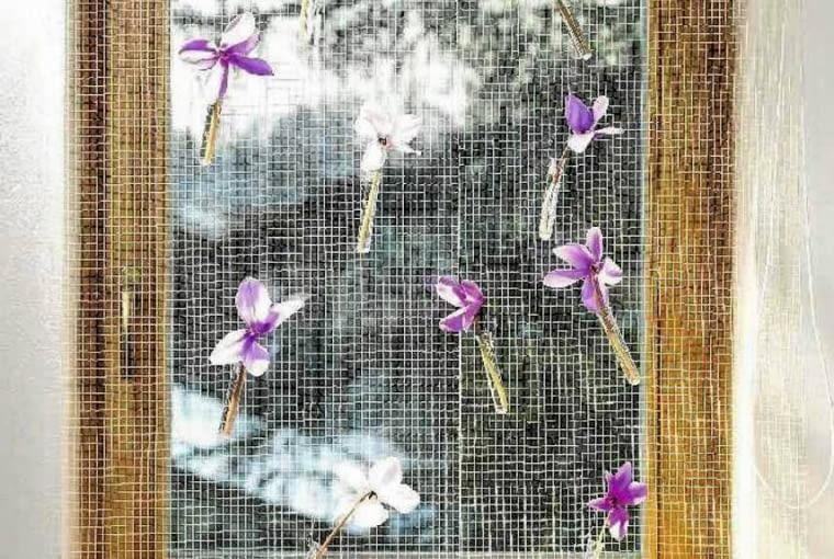 Subtelna dekoracja okna - kwiaty cyklamenów na siatkowej firance