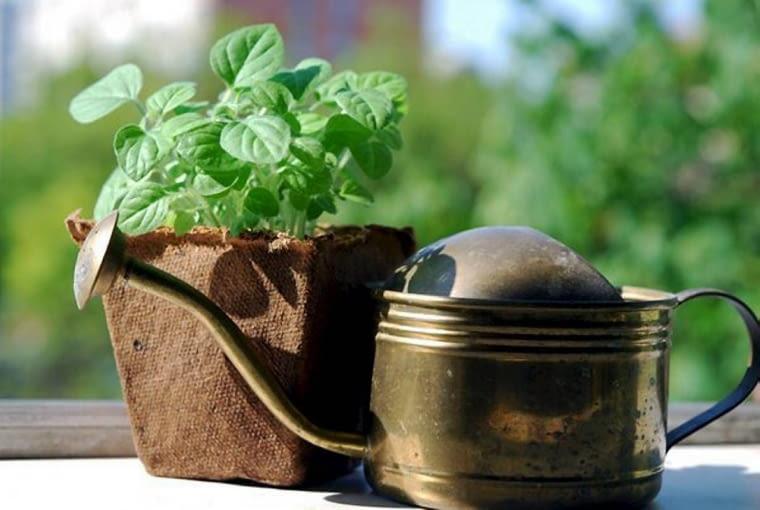 Podlewanie roślin balkonowych