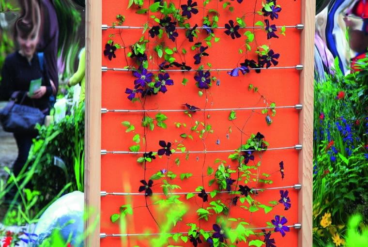 Powojnik pnie się po stalowych linkach naciągniętych na ramę. Jego kwiaty ładnie kontrastują z kolorowym ekranem.