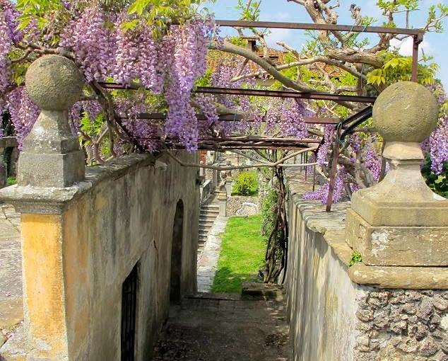 Pnącza - we włoskich ogrodach jest ich pełno: pnące róże, bugenwille, jaśminy, glicynie...