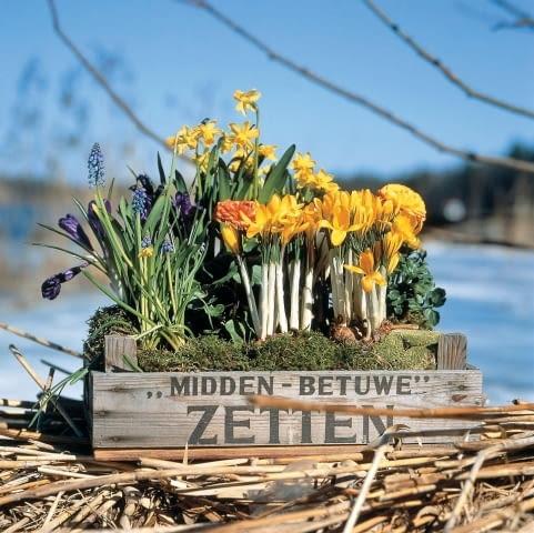 Kwiaty cebulowe: krokusy, szafirki, drobne narcyzy oraz jaskry azjatyckie.
