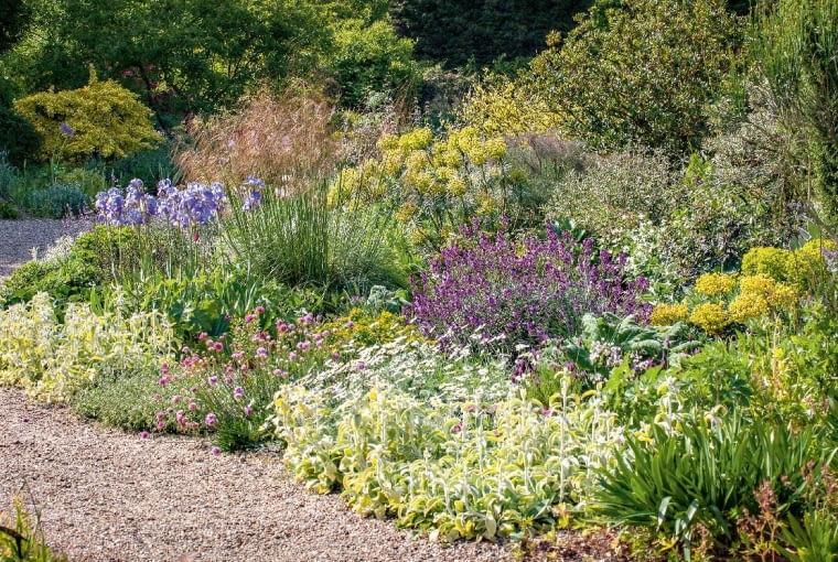 Trawy, zioła iinne byliny (m.in. zawciągi, szałwie, irysy, czyśce) kuszą kolorami izachwycają zapachem.