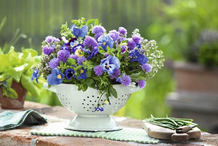 E?bares Gesteck in K´chensieb : Bl´ten von Schnittlauch ( Allium schoenoprasum ), Viola wittrockiana und cornuta ( Stiefm´tterchen und Hornveilchen ), Salbei ( Salvia officinalis ), Thymian ( Thymus ) und Oregano ( origanum ) SLOWA KLUCZOWE: STRfU?E msgnp12 000 Kr uter blau lila e?bare Bl´ten HAUSHALTSGERfT ZWECKENTFREMDET Fr´hsommer draussen Floristik quer Str u?e
