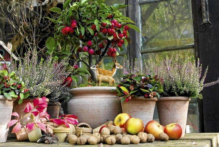 Balkon pełen jesiennych kwiatów - wrzosów, golterii, cyklamenów - może być piękny aż do zimy. Ale cyklameny, chryzantemy drobnokwiatowe i inne kwiaty wrażliwe na mróz lepiej przenosić na noc pod dach, żeby dłużej pozostały piękne