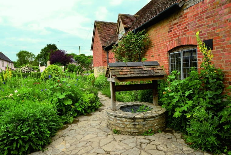 Piękne dziewanny (Verbascum) służą w Europie od setek lat jako rośliny zielarskie.