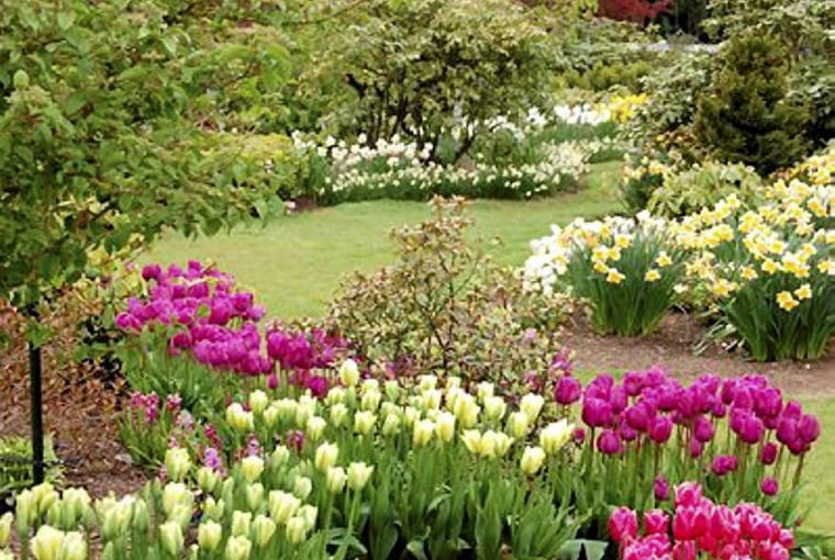 Kwiaty cebulowe tworzące obwódkę rabaty