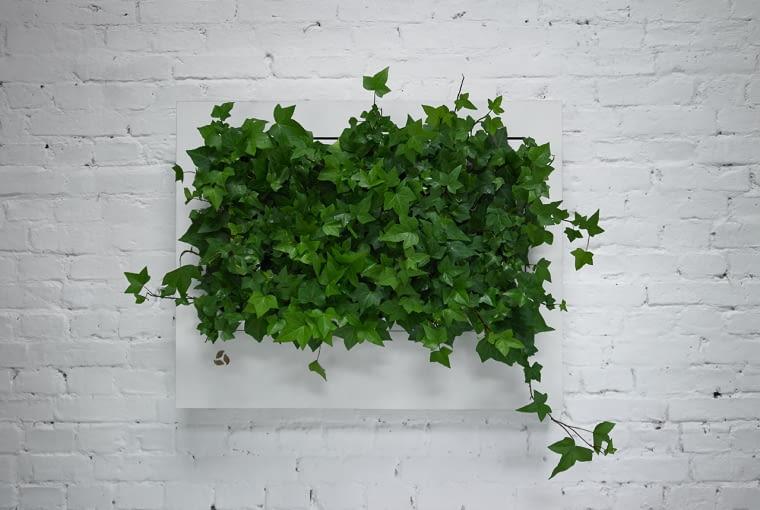 Zielony obraz na ścianie