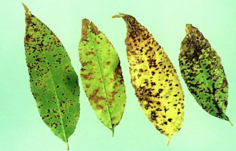 Lekceważenie objawów ogrodnika chorobowych na roślinach to jeden z głównych błędów