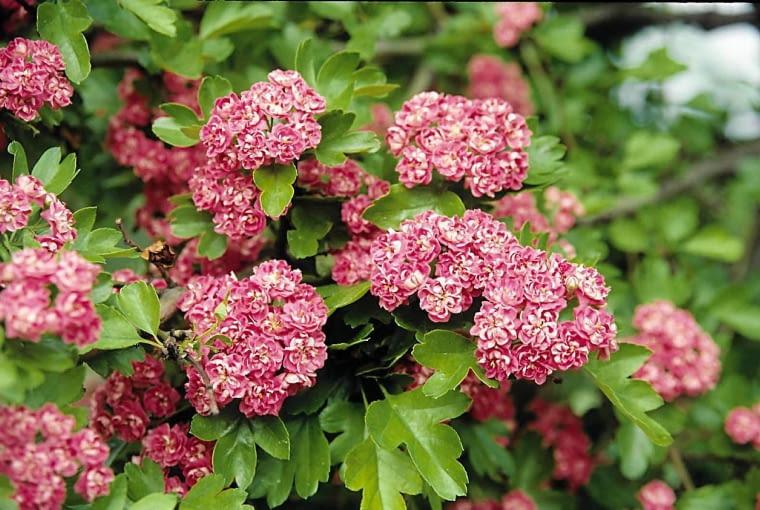 SLOWA KLUCZOWE: kwiat