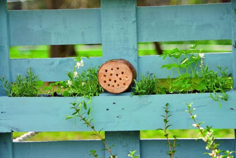 Owady chętnie zamieszkają w kanalikach wywierconych w plastrze drewna.