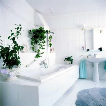 W łazience doskonale czuje się większość roślin doniczkowych. W wilgotnej atmosferze pięknie się rozrastają i kwitną.