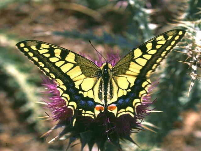 Motyle to ozdoba lata, zaprośmy je więc do ogrodu, sadząc rośliny, które dadzą im nektar, oraz takie, którymi mogą żywić się ich gąsienice