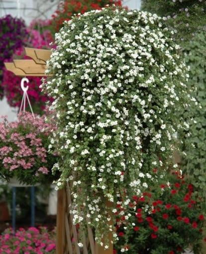 Rośliny Na Południowy Balkon