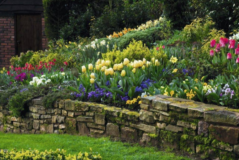 Stone wall with border in the cottage garden planted with yellow Tulipa 'Sweetheart', Narcissus and blue Viola.