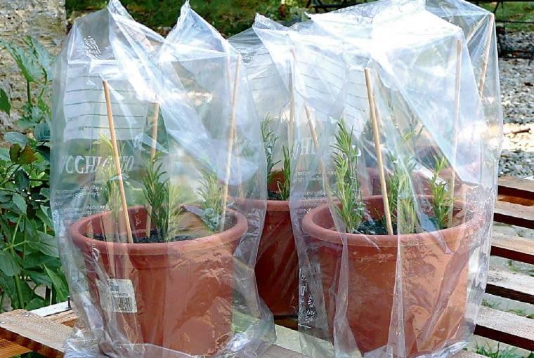 Krok po kroku: robimy sadzonki: 4. Pojemnik nakrywamy folią wspartą na patyczkach. Rośliny często spryskujemy wodą. Całość ustawiamy wjasnym miejscu, ale chronimy przed ostrym słońcem.
