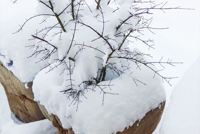 Usuwajmy Czapy śniegu zalegające wdonicach.