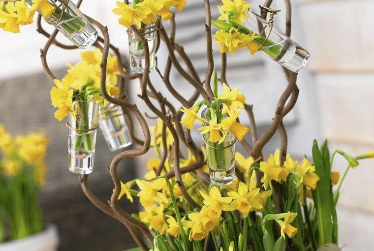 Narcissus tete a tete in arrangement SLOWA KLUCZOWE: Arrangement Lifestyle Narcissus Narcissus Tete a Tete Narzisse Narzissen Osterei Osterfeiertage Ostern Patio Schnittblume Tete a Tete Tisch corylus einfarbig eingetopft gelb Hochformat