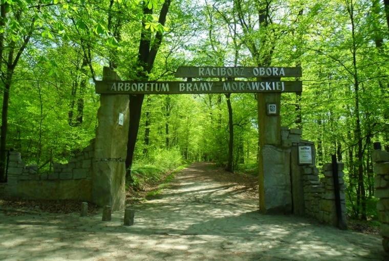 Arboretum w Raciborzu