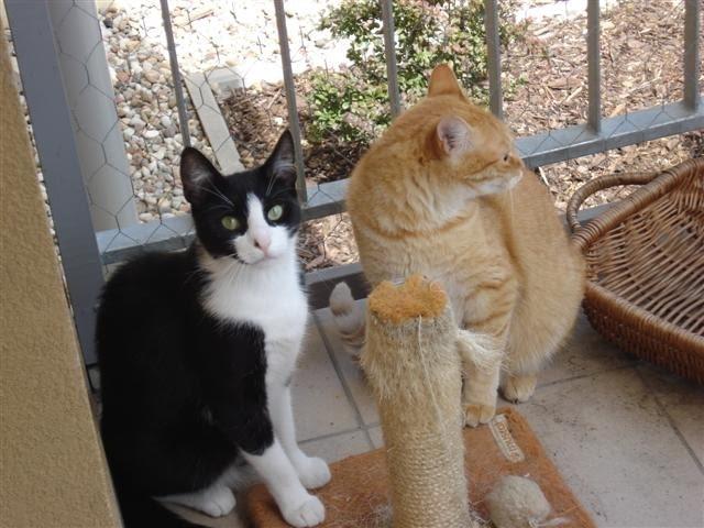 Drapak dla kota na balkonie