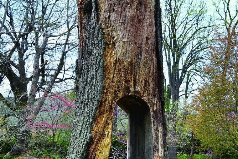 Ścięte lub powalone drzewo zwykle służy jako opał, ale można je wykorzystać na wiele innych, ciekawych sposobów.