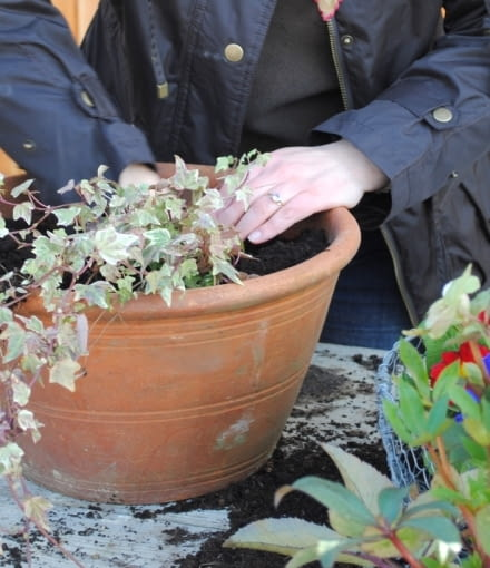 Po ułożeniu na dnie 5cm warstwy drenażu, do donicy wsypujemy podłoże ogrodowe do kwiatów balkonowych lub uniwersalne. Do donic wiosennych nie musimy wsypywać granulatu zatrzymującego wilgoć, ponieważ dni jeszcze nie są tak gorące jak latem - możemy jednak dorzucić garść granulowanego obornika dla podtrzymania kwitnienia roślin.