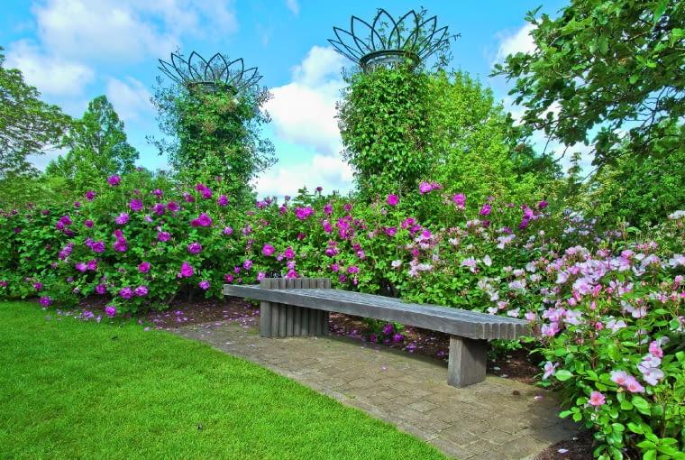 Zapach róż z grupy parkowych otula ten wypoczynkowy kącik. Obok pnącza na metalowych słupach.
