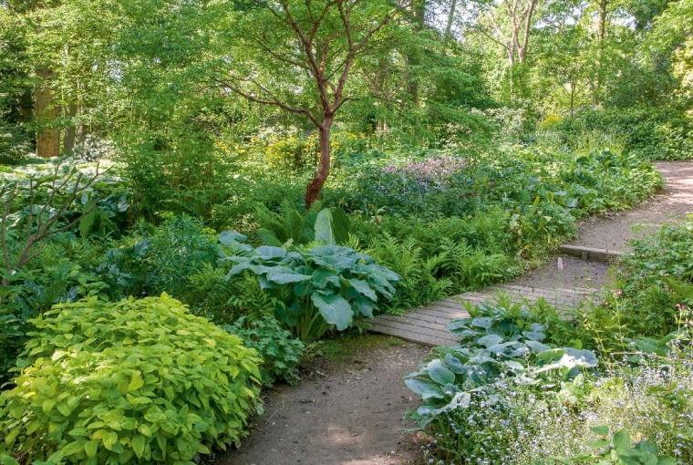 Wcienistym ogrodzie rosną rozmaite paprocie, funkie, rodgersje...