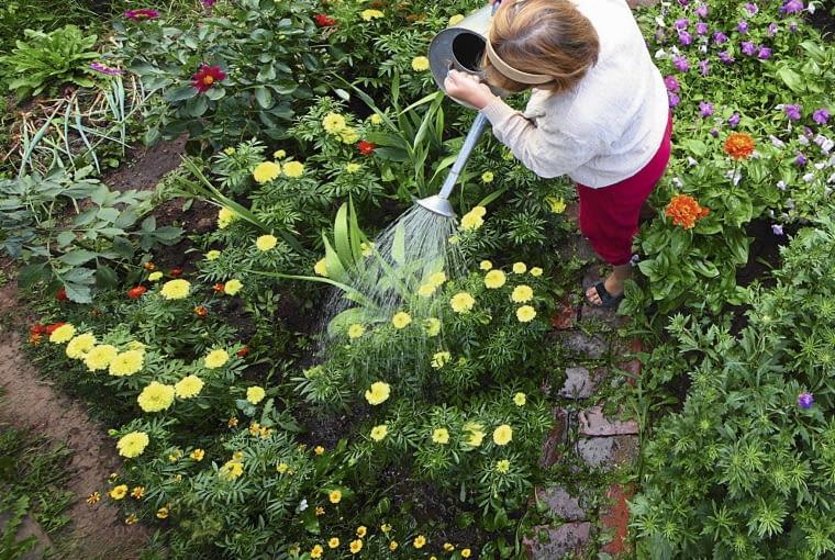 naturalne metody ochrony roślin
