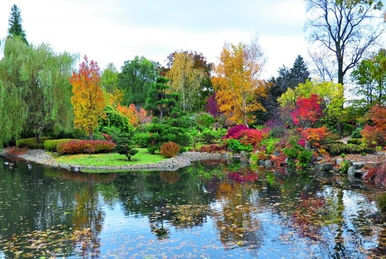 Kępy drzew i krzewów otaczające staw w Ogrodzie Japońskim jesienią przybierają niezwykłe płomienne barwy.